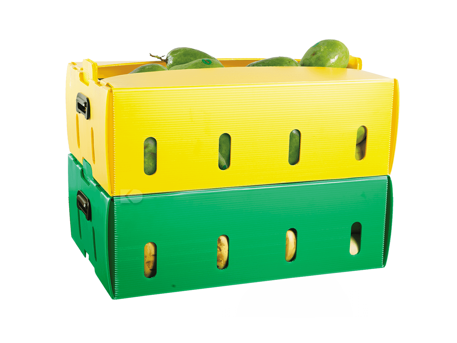 food packaging - box buah